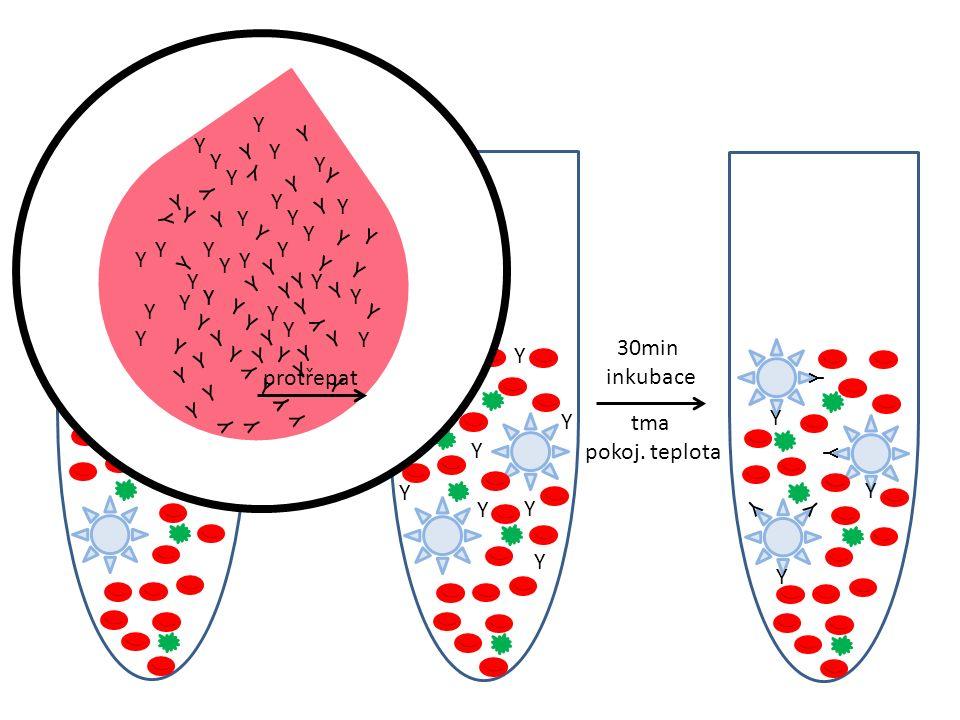 Mnoklonální protilátky protilátky jsou produktem jediného klonu B lymfocytů (klony vzniklé fúzí buněk produkujících protilátky a myelomových buněk, jež schopnost produkce svého vlastního imunoglobulinu ztratily) jsou naprosto totožné a jsou přísně specifické proti jedinému epitopu