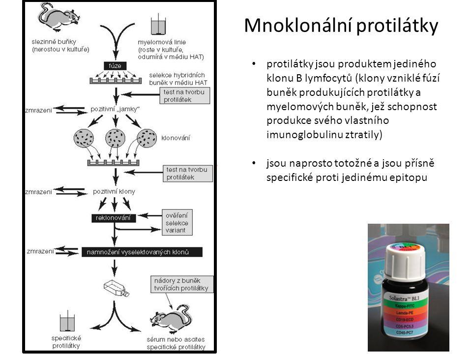 Mnoklonální protilátky protilátky jsou produktem jediného klonu B lymfocytů (klony vzniklé fúzí buněk produkujících protilátky a myelomových buněk, je