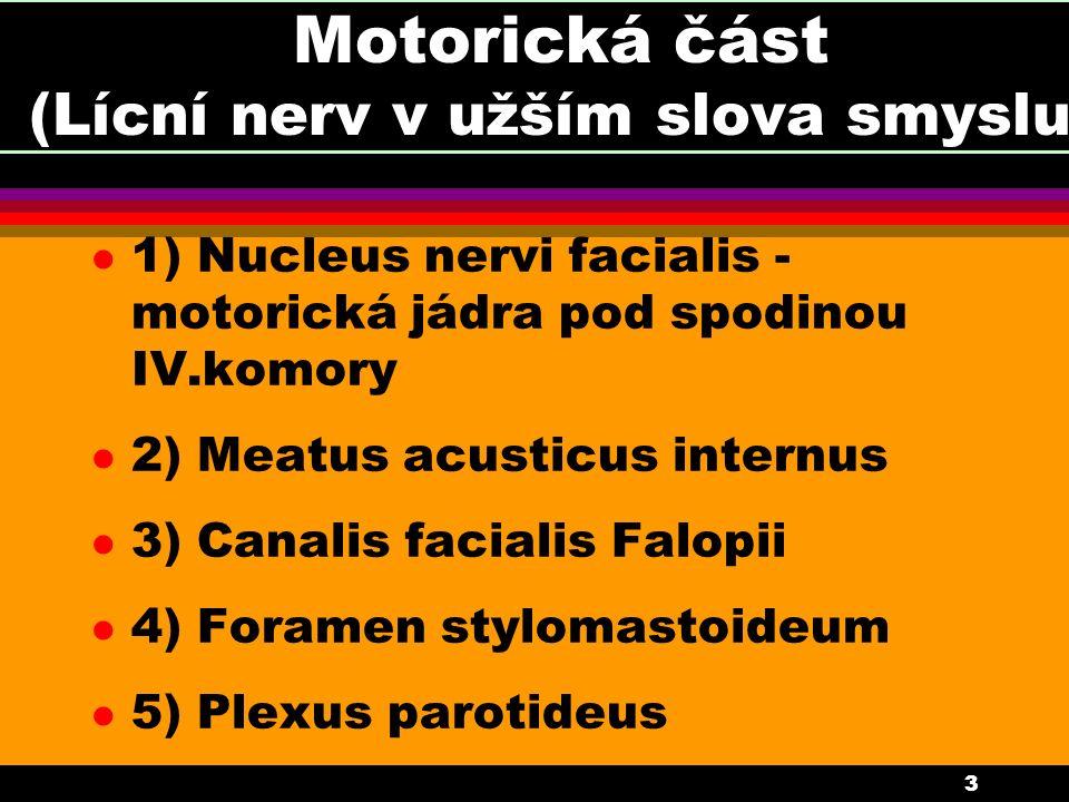 3 Motorická část (Lícní nerv v užším slova smyslu) l 1) Nucleus nervi facialis - motorická jádra pod spodinou IV.komory l 2) Meatus acusticus internus