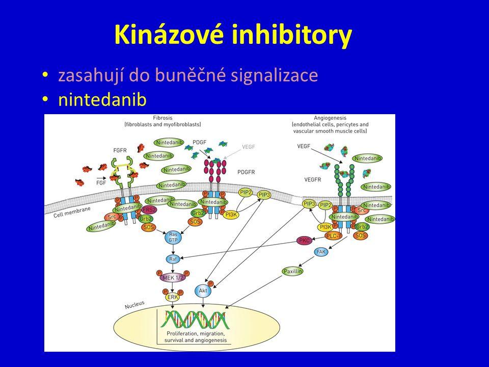 Kinázové inhibitory zasahují do buněčné signalizace nintedanib
