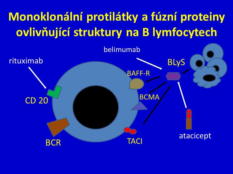 Monoklonální protilátky a fúzní proteiny ovlivňující struktury na B lymfocytech TACI BCR CD 20 BLyS BAFF-R BCMA rituximab belimumab atacicept