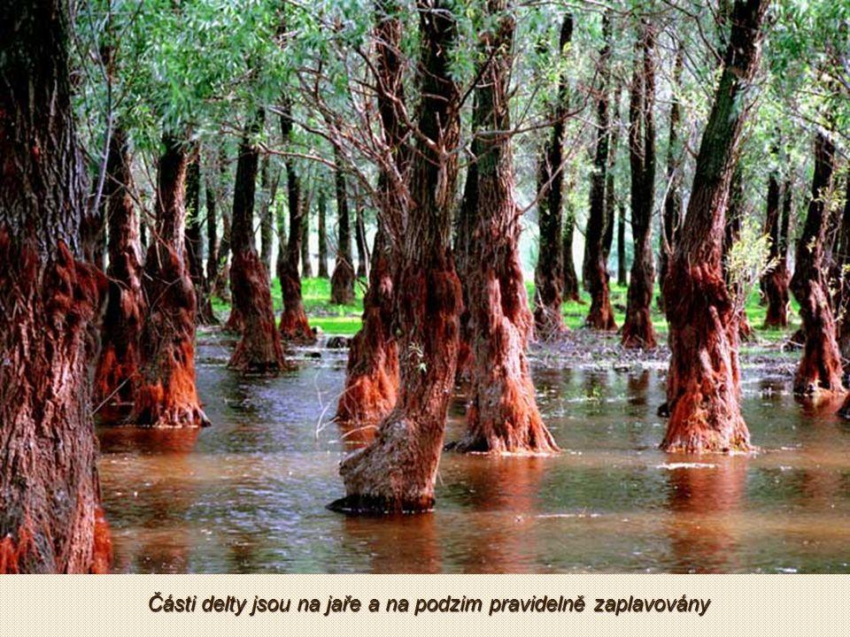 Je pokryta rákosím, mokřady a lužními lesy