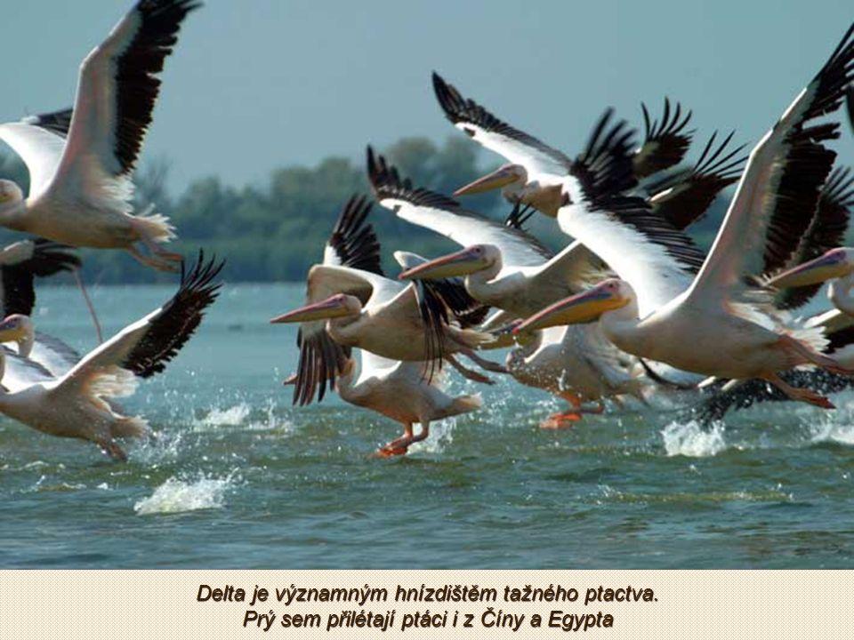 V mokřadech, stojatých a tekoucích vodách dunajské delty žije přes 1 200 druhů rostlin, 300 druhů ptáků a 45 druhů ryb