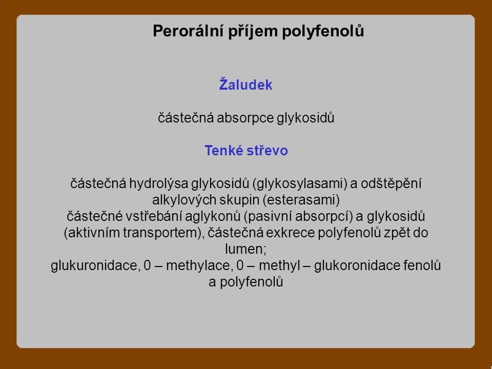 Žaludek částečná absorpce glykosidů Tenké střevo částečná hydrolýsa glykosidů (glykosylasami) a odštěpění alkylových skupin (esterasami) částečné vstřebání aglykonů (pasivní absorpcí) a glykosidů (aktivním transportem), částečná exkrece polyfenolů zpět do lumen; glukuronidace, 0 – methylace, 0 – methyl – glukoronidace fenolů a polyfenolů Perorální příjem polyfenolů