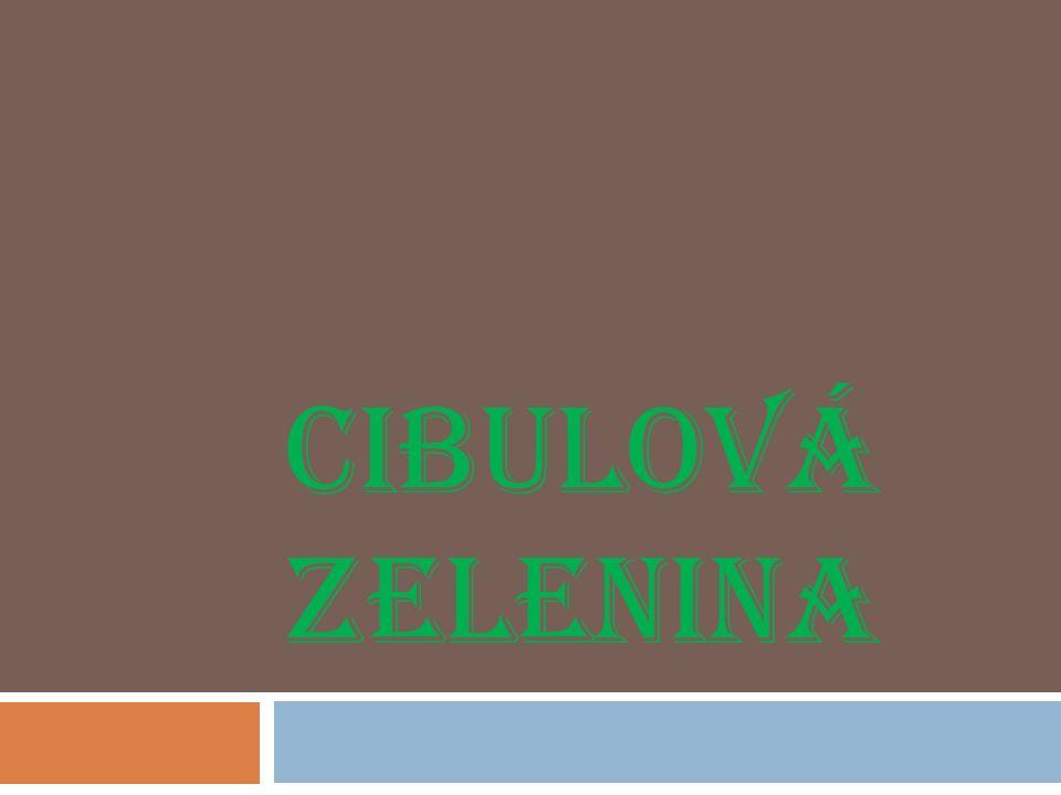 CIBULOVÁ ZELENINA