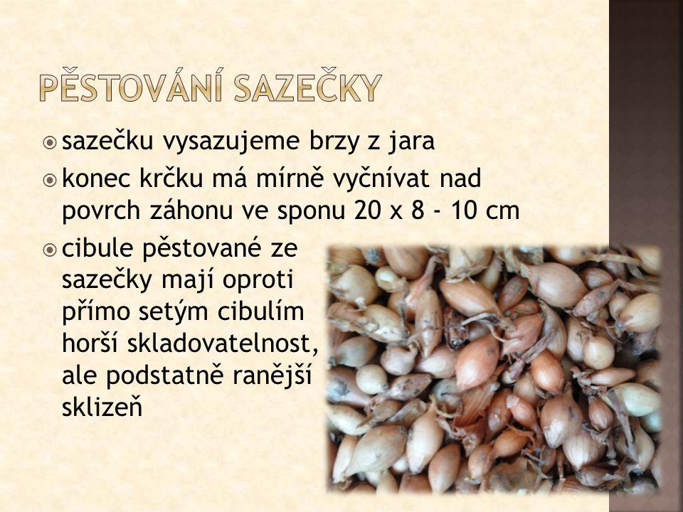  ozimé odrůdy jsou zajímavé zejména pro dosažení rané sklizně, protože dozrávají ještě dříve než cibule pěstované ze sazečky  osivo vyséváme od poloviny srpna do začátku září  po výsevu je nutné zabezpečit dostatek vláhy pro vzcházení rostlin tak, aby rostliny začaly rychle růst a do zámrazu dosáhly tloušťky minimálně 5 mm