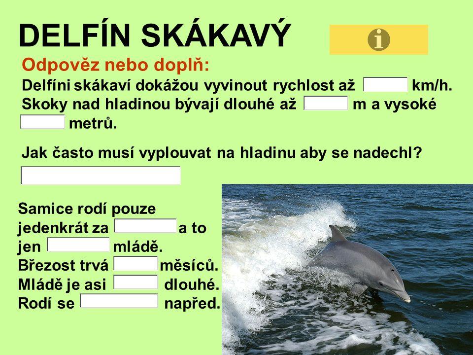 DELFÍN SKÁKAVÝ Odpověz nebo doplň: Delfíni skákaví dokážou vyvinout rychlost až km/h.