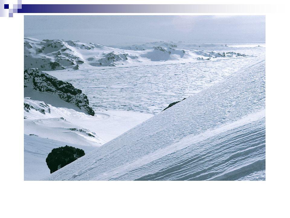 Flóra Antarktidy I. vliv klimatu pouze na skaliscích (nunatoky)a sutích bez stromů a keřů