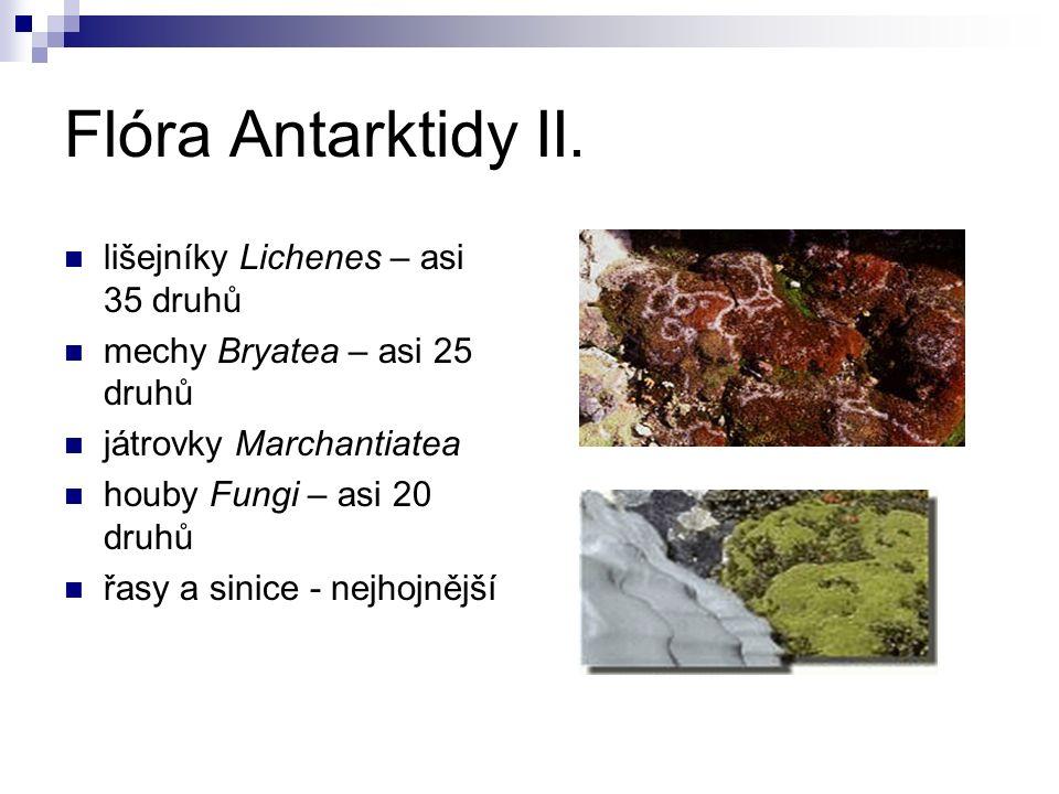 Fauna Antarktidy několik druhů bezobratlých: roztoči (Acarina), chvostostoci (Collembola) a bezkřídlé mouchy život vázaný na moře Krill Euphasia superba phytoplankton