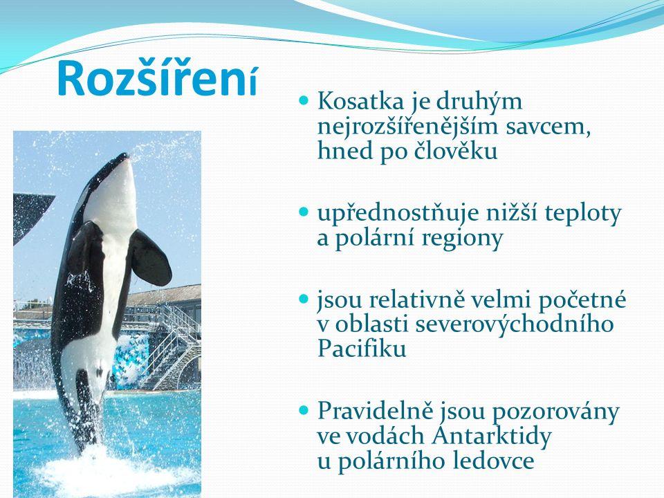 Rozšířen í Kosatka je druhým nejrozšířenějším savcem, hned po člověku upřednostňuje nižší teploty a polární regiony jsou relativně velmi početné v obl
