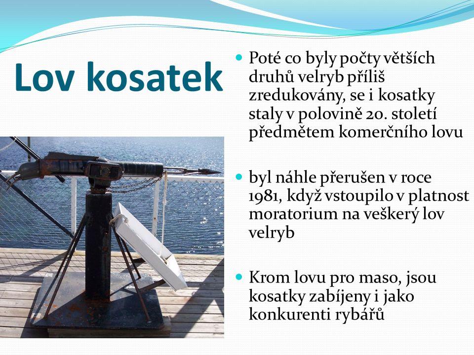 Kosatka.[online]. [cit. 2013-05-20].