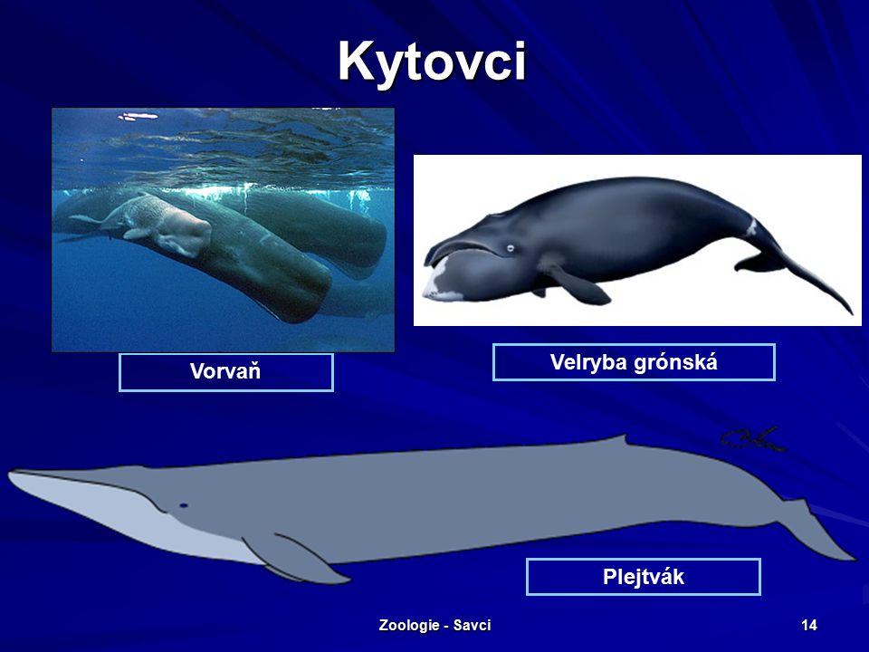 Zoologie - Savci 14 Kytovci Vorvaň Plejtvák Velryba grónská