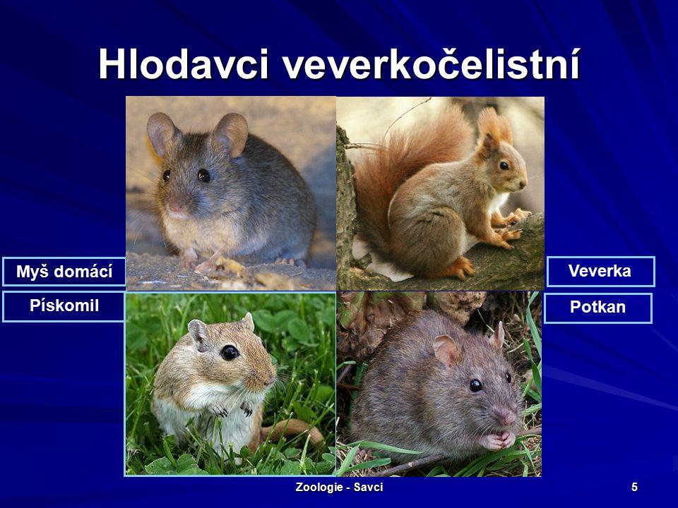 Zoologie - Savci 5 Hlodavci veverkočelistní Myš domácí Pískomil Potkan Veverka