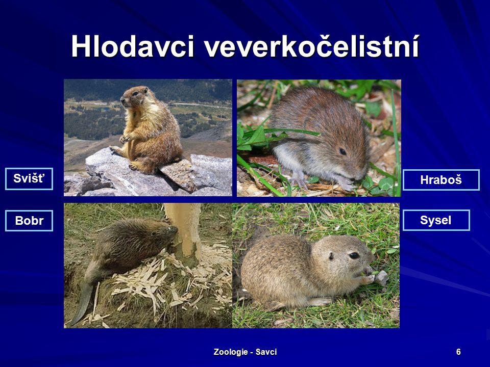 Zoologie - Savci 6 Hlodavci veverkočelistní Svišť Hraboš Bobr Sysel