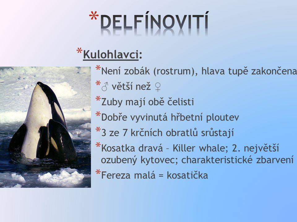 * Kulohlavci: * Není zobák (rostrum), hlava tupě zakončena * ♂ větší než ♀ * Zuby mají obě čelisti * Dobře vyvinutá hřbetní ploutev * 3 ze 7 krčních obratlů srůstají * Kosatka dravá – Killer whale; 2.