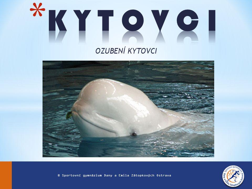 OZUBENÍ KYTOVCI © Sportovní gymnázium Dany a Emila Zátopkových Ostrava