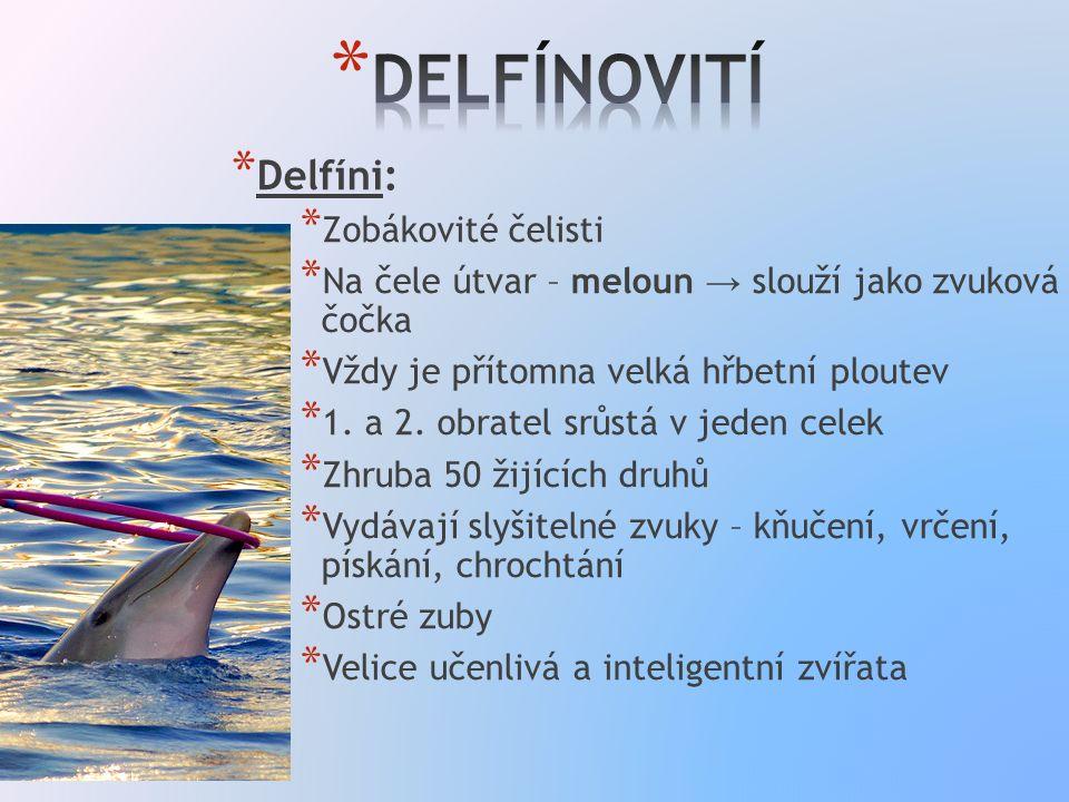 * Delfíni: * Zobákovité čelisti * Na čele útvar – meloun → slouží jako zvuková čočka * Vždy je přítomna velká hřbetní ploutev * 1.