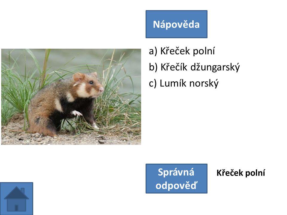 a) Křeček polní b) Křečík džungarský c) Lumík norský Nápověda Správná odpověď Křeček polní