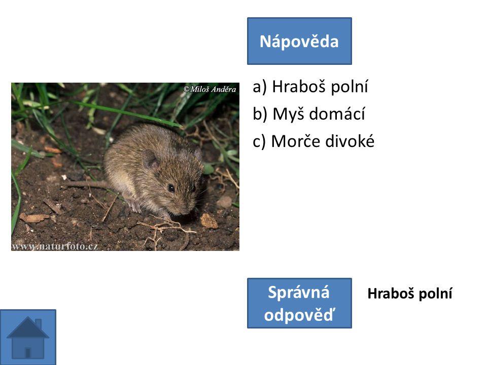a) Hraboš polní b) Myš domácí c) Morče divoké Nápověda Správná odpověď Hraboš polní