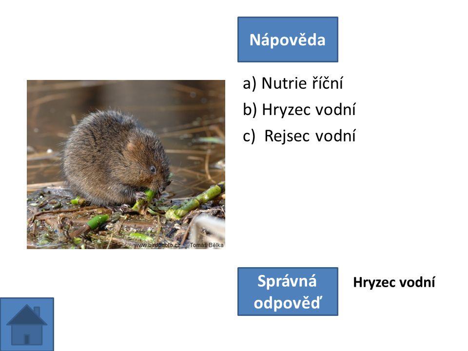 a) Nutrie říční b) Hryzec vodní c) Rejsec vodní Nápověda Správná odpověď Hryzec vodní