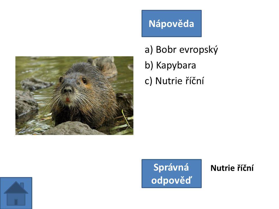 a) Bobr evropský b) Kapybara c) Nutrie říční Nápověda Správná odpověď Nutrie říční