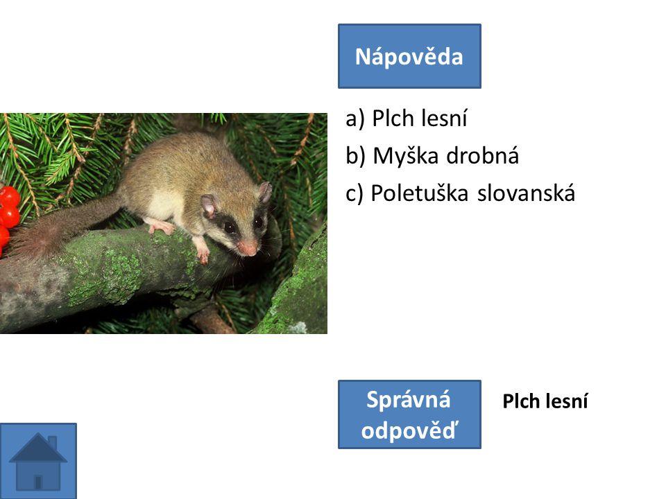 a) Plch lesní b) Myška drobná c) Poletuška slovanská Nápověda Správná odpověď Plch lesní
