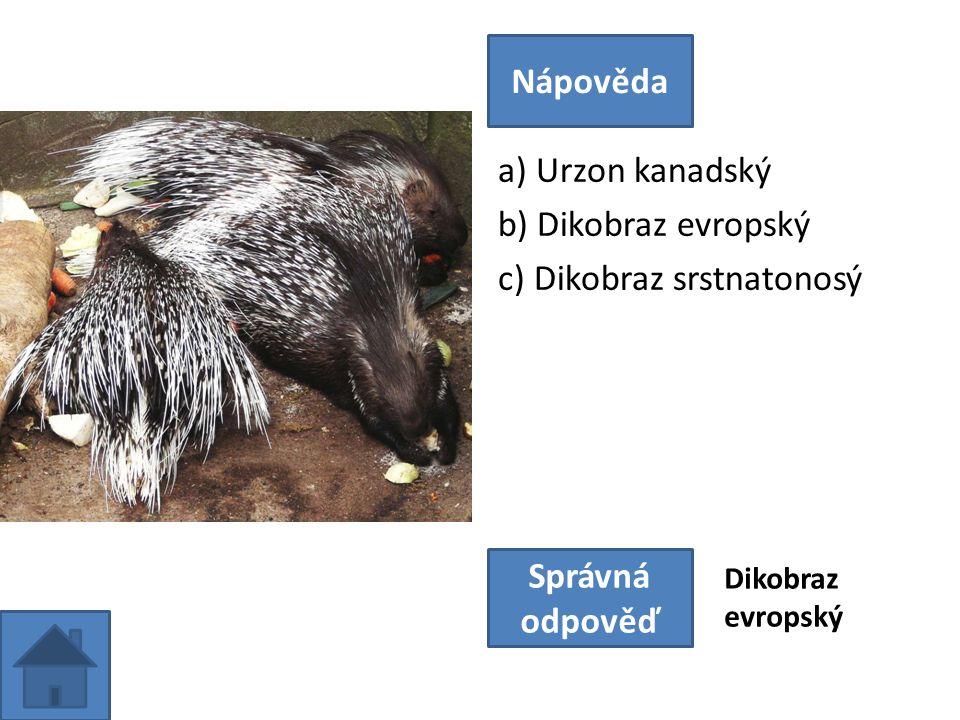 a) Urzon kanadský b) Dikobraz evropský c) Dikobraz srstnatonosý Nápověda Správná odpověď Dikobraz evropský