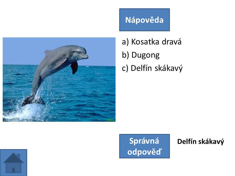 a) Kosatka dravá b) Dugong c) Delfín skákavý Nápověda Správná odpověď Delfín skákavý