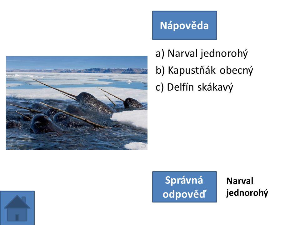 a) Narval jednorohý b) Kapustňák obecný c) Delfín skákavý Nápověda Správná odpověď Narval jednorohý