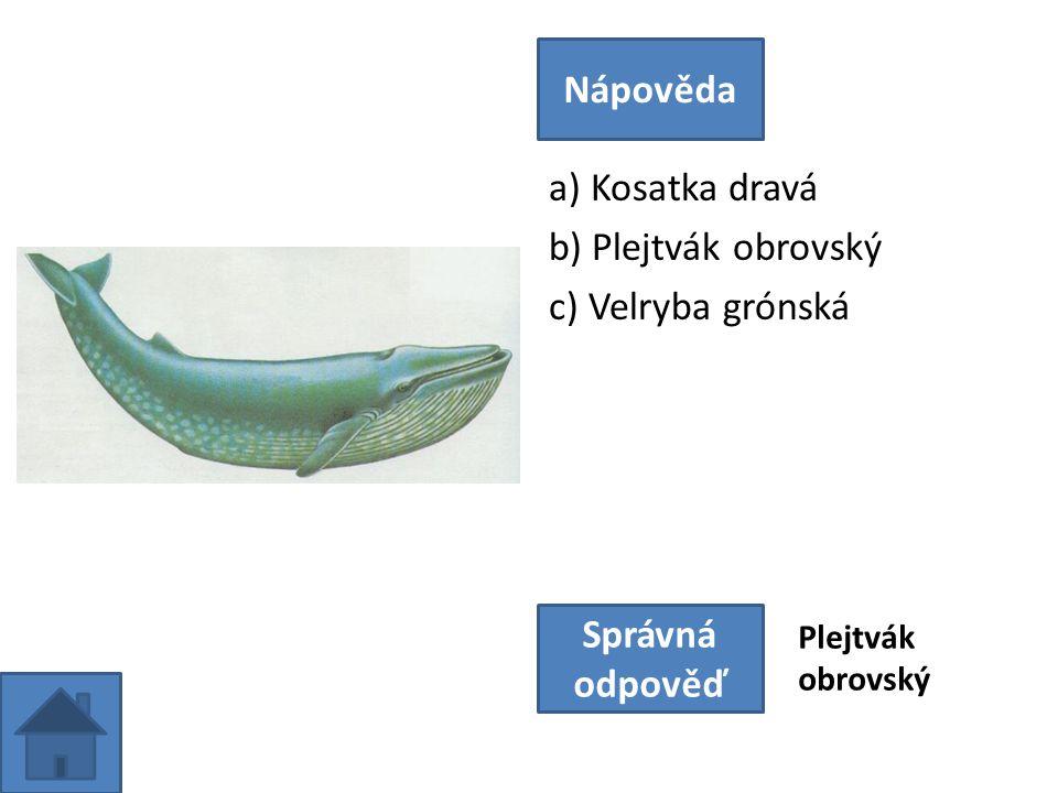 a) Kosatka dravá b) Plejtvák obrovský c) Velryba grónská Nápověda Správná odpověď Plejtvák obrovský