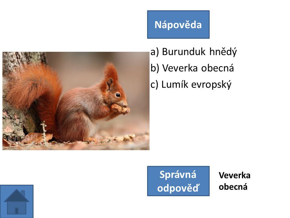 a) Burunduk hnědý b) Veverka obecná c) Lumík evropský Nápověda Správná odpověď Veverka obecná