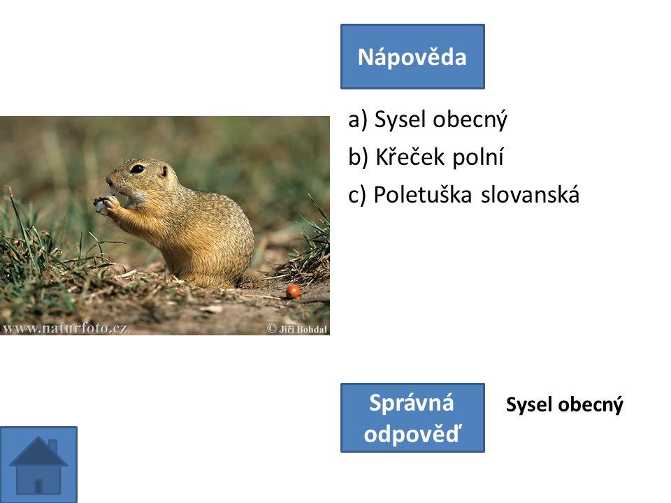 a) Sysel obecný b) Křeček polní c) Poletuška slovanská Nápověda Správná odpověď Sysel obecný