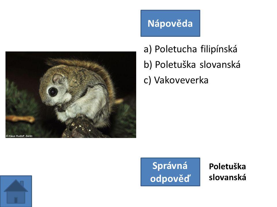 a) Poletucha filipínská b) Poletuška slovanská c) Vakoveverka Nápověda Správná odpověď Poletuška slovanská