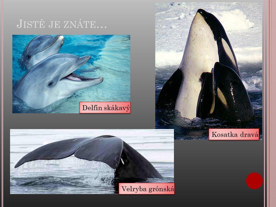 J ISTĚ JE ZNÁTE … Delfín skákavý Kosatka dravá Velryba grónská
