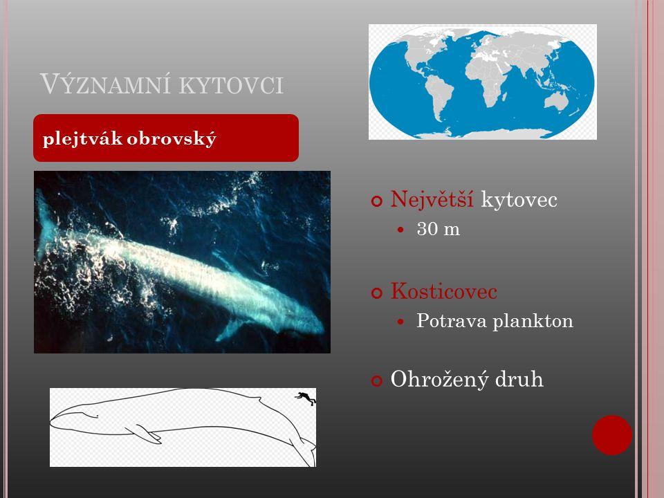 V ÝZNAMNÍ KYTOVCI Největší kytovec 30 m Kosticovec Potrava plankton Ohrožený druh plejtvák obrovský