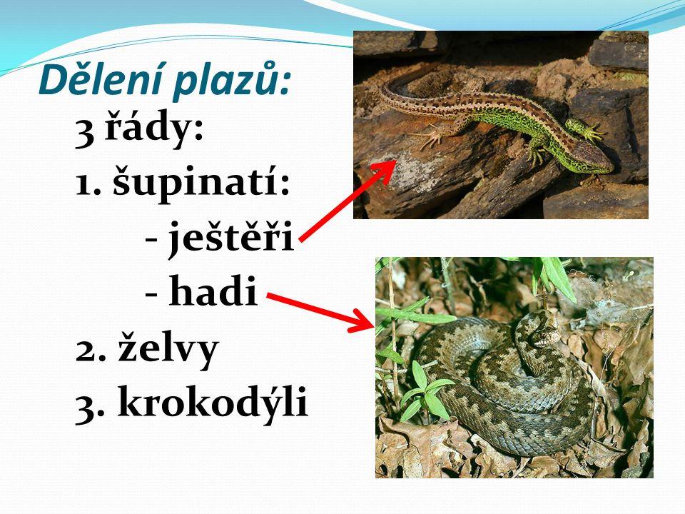 Dělení plazů: 3 řády: 1. šupinatí: - ještěři - hadi 2. želvy 3. krokodýli