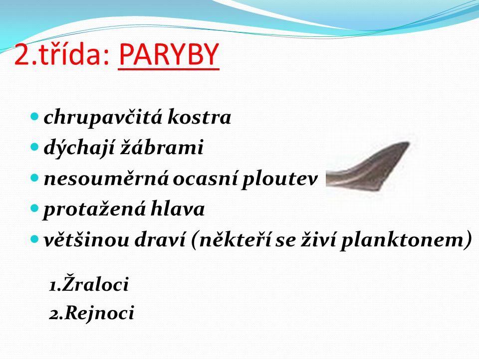 2.třída: PARYBY chrupavčitá kostra dýchají žábrami nesouměrná ocasní ploutev protažená hlava většinou draví (někteří se živí planktonem) 1.Žraloci 2.Rejnoci