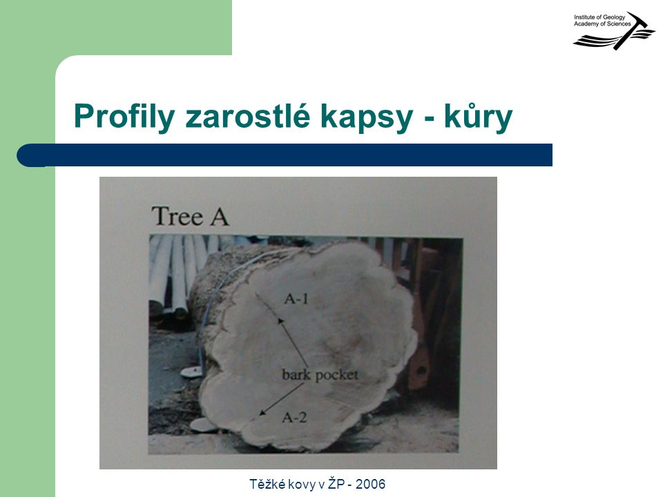 Těžké kovy v ŽP - 2006 Profily zarostlé kapsy - kůry