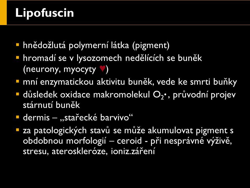 """Lipofuscin  hnědožlutá polymerní látka (pigment)  hromadí se v lysozomech nedělících se buněk (neurony, myocyty ♥ )  mní enzymatickou aktivitu buněk, vede ke smrti buňky  důsledek oxidace makromolekul O 2 ●, průvodní projev stárnutí buněk  dermis – """"stařecké barvivo  za patologických stavů se může akumulovat pigment s obdobnou morfologií – ceroid - při nesprávné výživě, stresu, ateroskleróze, ioniz.záření"""