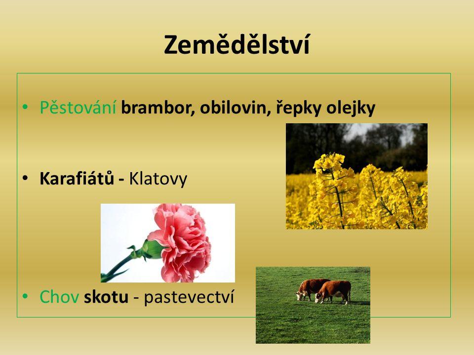 Zemědělství Pěstování brambor, obilovin, řepky olejky Karafiátů - Klatovy Chov skotu - pastevectví