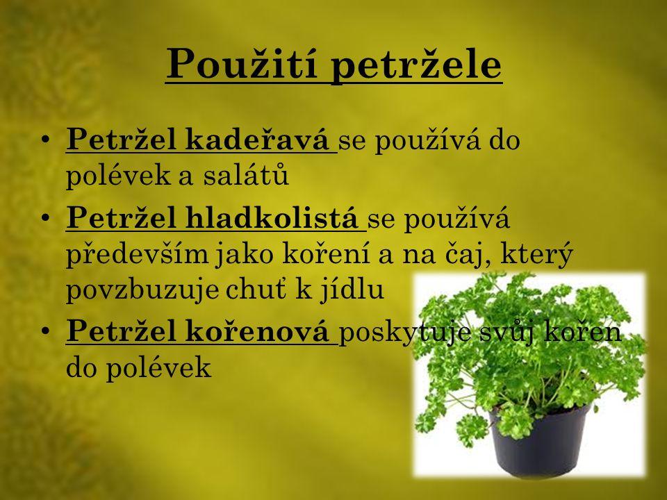 Použití petržele Petržel kadeřavá se používá do polévek a salátů Petržel hladkolistá se používá především jako koření a na čaj, který povzbuzuje chuť k jídlu Petržel kořenová poskytuje svůj kořen do polévek