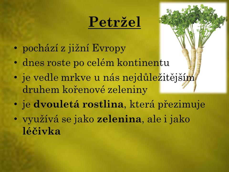 Petržel pochází z jižní Evropy dnes roste po celém kontinentu je vedle mrkve u nás nejdůležitějším druhem kořenové zeleniny je dvouletá rostlina, která přezimuje využívá se jako zelenina, ale i jako léčivka