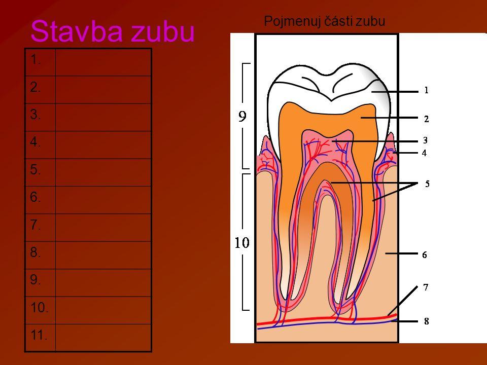 Stavba zubu Pojmenuj části zubu 1.zubní sklovina 2.zubovina 3.zubní dřeň 4.dáseň 5.zubní cement 6.čelist 7.céva 8.nerv 9.korunka 10.krček 11.kořen