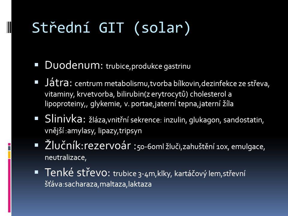 Střední GIT (solar)  Duodenum: trubice,produkce gastrinu  Játra: centrum metabolismu,tvorba bílkovin,dezinfekce ze střeva, vitaminy, krvetvorba, bil