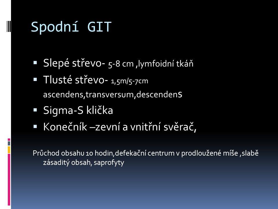 Spodní GIT  Slepé střevo- 5-8 cm,lymfoidní tkáň  Tlusté střevo- 1,5m/5-7cm ascendens,transversum,descenden s  Sigma-S klička  Konečník –zevní a vn