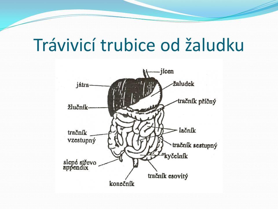 Trávivicí trubice od žaludku