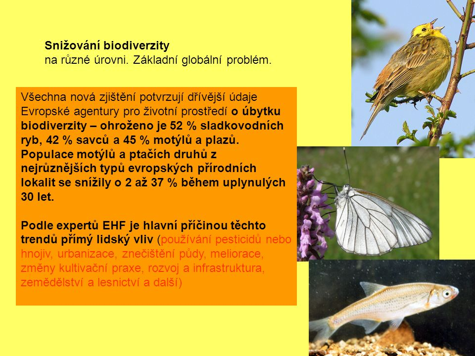 Snižování biodiverzity na různé úrovni. Základní globální problém.