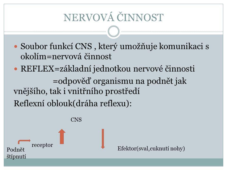 NERVOVÁ ČINNOST Soubor funkcí CNS, který umožňuje komunikaci s okolím=nervová činnost REFLEX=základní jednotkou nervové činnosti =odpověď organismu na podnět jak vnějšího, tak i vnitřního prostředí Reflexní oblouk(dráha reflexu): Podnět štípnutí receptor CNS Efektor(sval,cuknutí nohy)