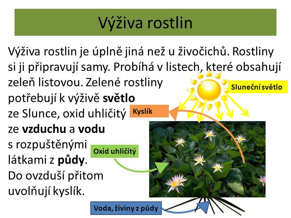 Výživa rostlin Výživa rostlin je úplně jiná než u živočichů. Rostliny si ji připravují samy. Probíhá v listech, které obsahují zeleň listovou. Zelené