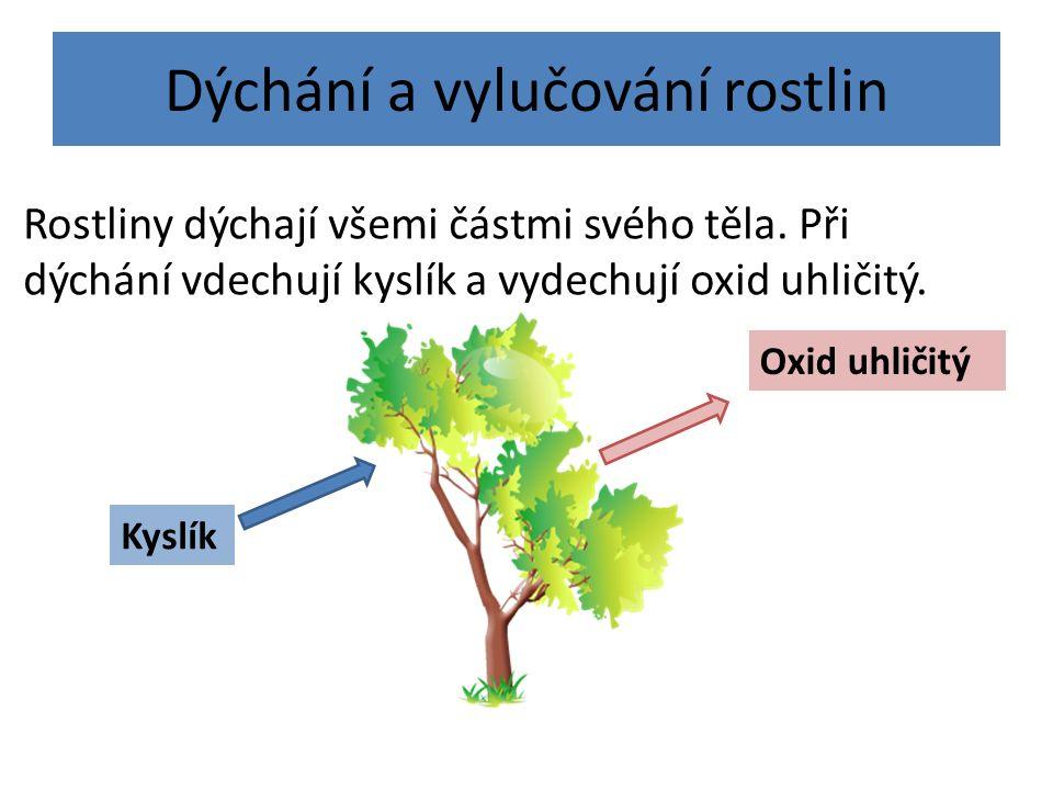 Dýchání a vylučování rostlin Rostliny dýchají všemi částmi svého těla. Při dýchání vdechují kyslík a vydechují oxid uhličitý. Oxid uhličitý Kyslík